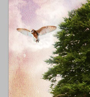 https://temphaa.com/img/tuts/Create-a-Nature-Inspired-Photo-Manipulation/Step12-owlplace.jpg