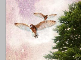 https://temphaa.com/img/tuts/Create-a-Nature-Inspired-Photo-Manipulation/Step13-owl2.jpg
